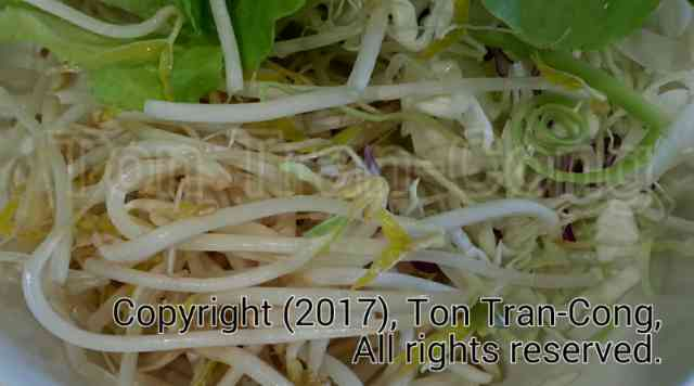 bean_sprouts_dish